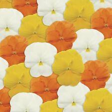 Flower - Pansy - Panola XP Citrus Mix F1 - 75 Seeds - Large