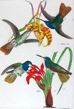 1857,REICHENBACH HUMMINGBIRDS FINE HAND COLOR ENGR. FOLIO U2C