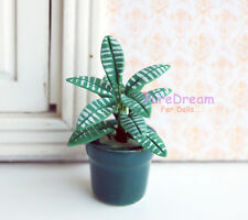 1/12 Dollhouse Mini Clay Plant Dieffenbachia amoena W/ Porcelain Pot 4.5cm tall