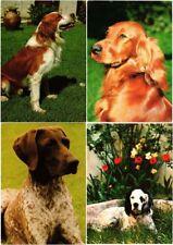 DOG, DOGS, ANIMALS 350 Modern Postcards