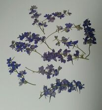 25 Purple Larskpur Stems - Real Dried Pressed Flowers - Diy Art Craft Scrapbook