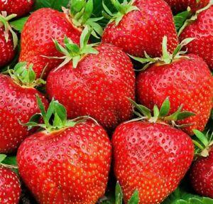 STRAWBERRY 20+ Seeds Sweet Temptation Sweetheart Variety Home Fruit Garden Healt