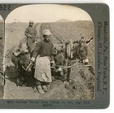 c1916 Keytone Stereoview Chinese Farm Boys, Donkeys, Port Arthur China
