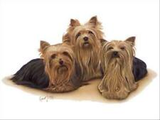 Yorkshire Terrier Group Dog Robert May Art Greeting Card Set of 6