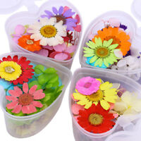 Colorful Dried Preserved  Flower Heart-Shaped Box 3D Nail Art Decoration