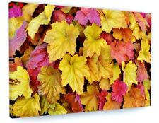 COLOURFUL AUTUMN WOODLAND TREE LEAVES CANVAS PICTURE PRINT CHUNKY FRAME #4145