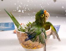 PARROT TAKING A BATH   MOUSE PAD  IMAGE FABRIC TOP RUBBER BACKED