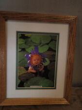 Anne Geddes/ baby/ dress up/ as purple flower/