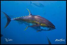 "Realfish H20 Series: Tuna  "" One of the Gang "" Fish Mat Floor Mat Doormat 24x36"