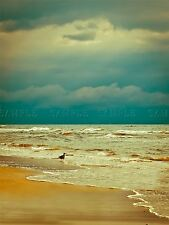 PHOTOGRAPHY SEASCAPE BEACH BIRD GULL WAVES ATMOSPHERE ART POSTER PRINT BMP10115