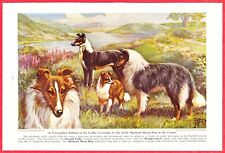 1941 Dog Print ~ Collie (smooth & rough), Shetland Sheep by Edward Herbert Miner