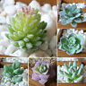 HD_ 1Pc Plastic Fake Artificial Succulents Plant Bonsai Garden Home Office Decor