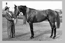TULLOCH & T J Smith 1960 Australian race horse modern Digital Photo Postcard
