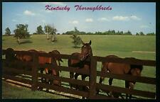 KENTUCKY THOROUGHBREDS HORSE FARM PASTURE BLUE GRASS COLOR POSTCARD COND:VG
