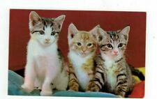 """Vintage Cat Kitten post card """"The Three Little Kittens"""""""