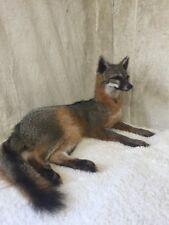 NEW Grey Fox Taxidermy Mount