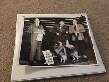 Vintage Dog Show Champion Winner Press Photo Keeshond Jackpot 1970 Kennel Club
