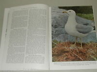 1948 magazine articles on Sea Birds, Labrador, St Lawrence, Quebec