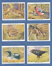 Complete/Full Sets Birds Collectable Cigarette Cards