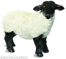 Suffolk Sheep Garden Ornament - Lamb- TC204 -  Resin