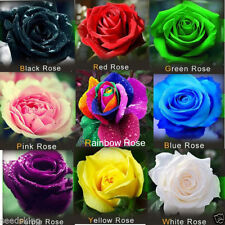 ROSE PLANT FLOWER SEEDS 9 DIFFERENT COLORS 5 SEEDS EACH (45 seeds)