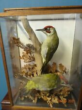 More details for vintage pair of green woodpeckers mounted in case