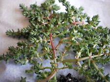 Peat Temperate Evergreen Cactus & Succulent Plants
