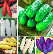 Bonsai Mixed Cucumber Plants 100 Pcs Seeds Garden Decoration Free Shipping 2019