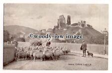 tq2606 - Dorset - Farmers Herd their Sheep past Corfe Castle Ruins - Postcard