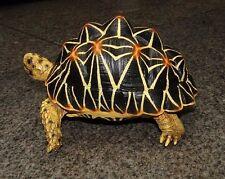 1:1 Life Size Large Star Tortoise Resin Replica Model Figurine Figure 22cm B