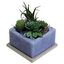 Habersham Cactus Water Succulent Geo Scented Cube