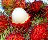 5 pcs Rambutan Seeds Fruits Bonsai Plant Tree House Herb Garden Flower Pot Decor