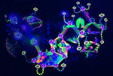 Mushroom Tapestry Psychedelic Backdrop Trippy Neon Blacklight Art Psilocybin UV