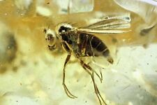Baltic Amber, Fossil Inclusion, detailed Brachycera fly
