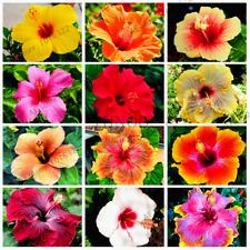 100 PCS Seeds Hibiscus Flowers Bonsai Home Garden Plants Mix Free Shipping 2019