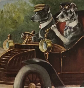 HARLEQUIN GREAT DANE as driver Oldtimer Car  a/s SCHROPLER  old dog PC 1910