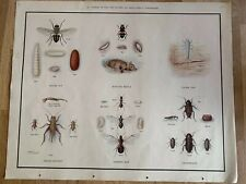 Antique Beetle Vintage Variety Of Insects All Chart Poster Wall Decor X-377