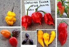 50 semi-5 varietà peperoncino CAROLINA REAPER HABANERO,TRINIDAD,NAGA,JOLOKIA