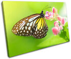 Butterfly Animals SINGLE CANVAS WALL ART Picture Print VA