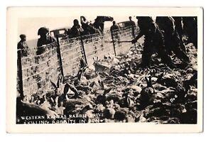 RPPC  Killing RABBITS in PEN Western KANSAS Bunny DRIVE Postcard KS Picture # 6