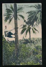 Africa LIBERIA Monrovia native climbing coconut tree PPC mailed Gold Coast 1909