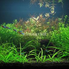 1000x Aquarium Grass Mixed Seeds Water Aquatic Home Fish Tank Plant Decor New CA