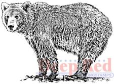 Deep Red Stamps Grizzly Bear Rubber Cling Stamps