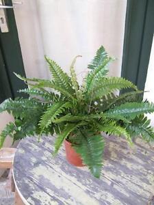Künstlicher Farn Spitzen-Qualität Kunstpflanze Pflanze im Topf