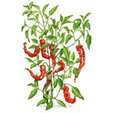 Jimmy Nardello Pepper Seeds 50+ Mild sweet Pepper garden Vegetable Free Shipping