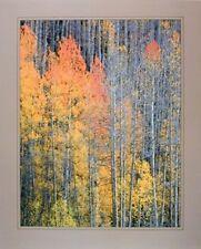 Forest Aspen Tree in the Fall Willard Clay Nature Wall Decor Art Print (16x20)
