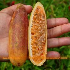 20 Seeds/Pack Rare Banana Passion Fruit Seeds Pink Flower Tropical Garden Passif