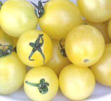 tomato, CHERRY - SNOW WHITE, 20 SEEDS! GroCo