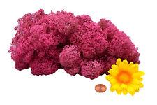 Muwse Islandmoos Köpfe V 25g Pink 2x gereinigt weich trocken. Moos Deko