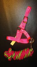 Cria (Alpaca Baby) Nylon Halter & Bonus Lead.Usa made!